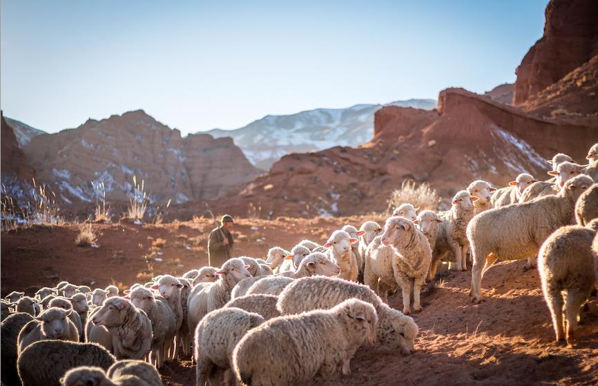 «Diventeranno un solo gregge, un solo pastore»