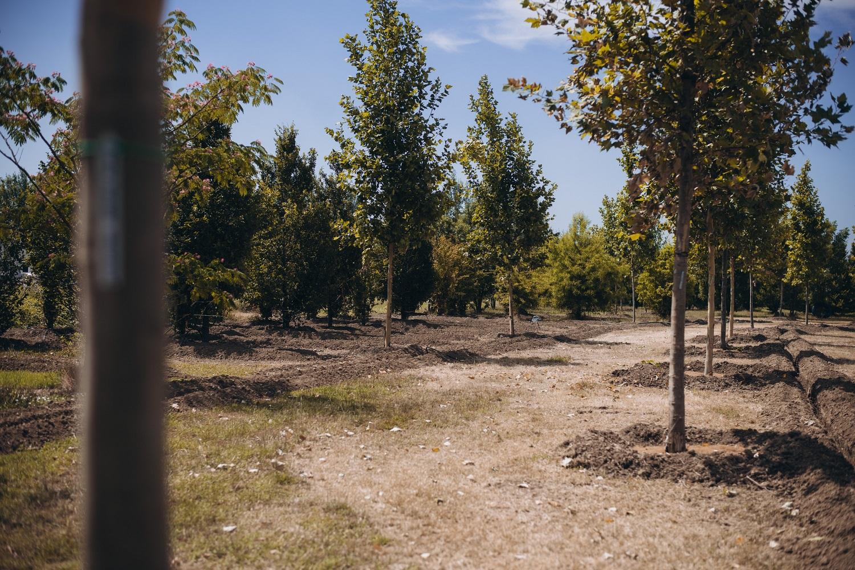 Parco Santacroce: il polmone verde si amplia