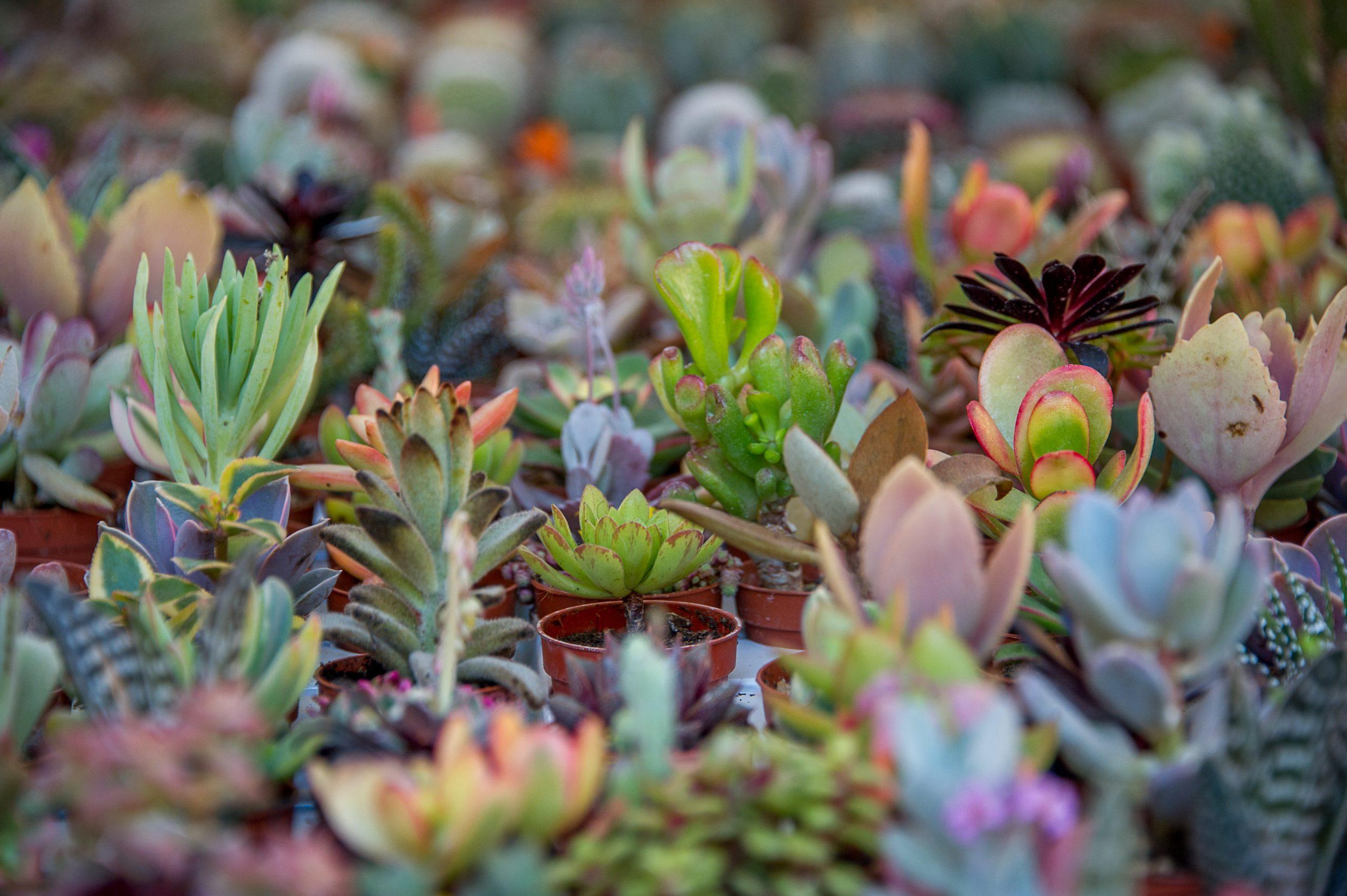Carpinfiore, tutti i colori di fine estate